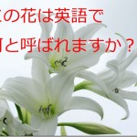 この花は英語で何と呼ばれますか[SVOC]という受動態の文(受け身の文)